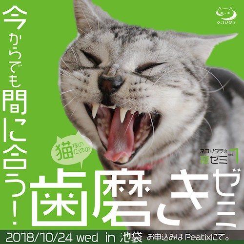 愛猫の歯を磨いてる?猫向けのデンタルケア講座、10/24に池袋で開催