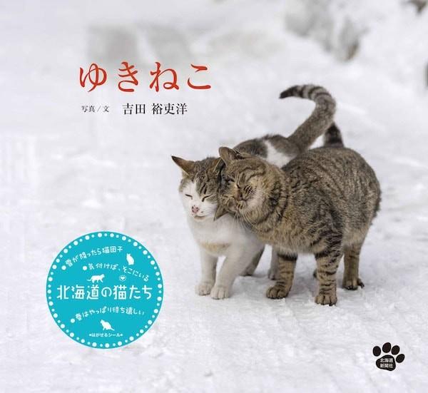 北海道の猫に密着した2冊の写真集「ゆきねこ&かべねこ」の写真展が開催