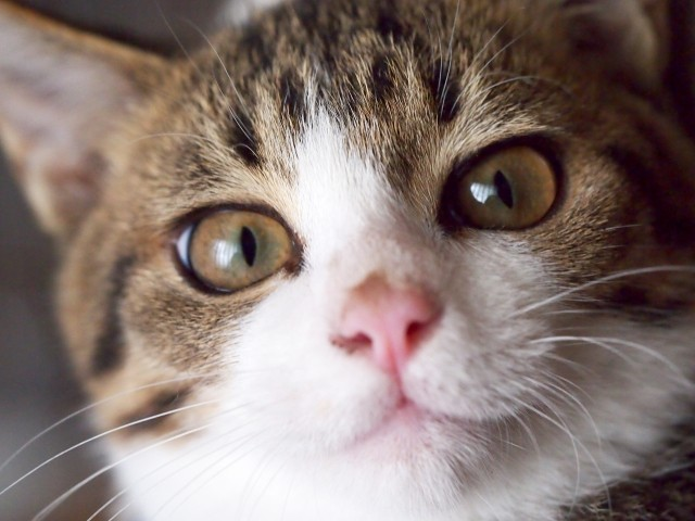 フォスターアカデミー、保護猫を預るのに必要な知識や心得を学べる「猫コース」第6期の受講者を募集中