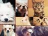 ペット専門教会に犬猫カフェ「アニマルミーティングルーム」がグランドオープン