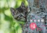 神社の本殿で日向ぼっこする猫が神々しい…「岩合光昭 福ねこカレンダー」2022年版が登場