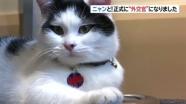 ヨルダンの英大使館のネコ、「外交ネコ」に正式就任