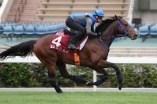 【香港チェアマンズSP】ファインニードルが最終追い T.ベリー騎手「完璧に仕上がっている」