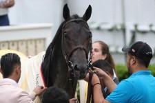プリークネスS馬クラウドコンピューティングが引退、ケンタッキー州で種牡馬入りへ