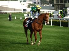 高松宮記念の「消しがちな外国馬ブリザード」が実は弱点を克服した説