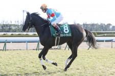 穴馬候補は5頭。菊花賞で台頭する伏兵馬のパターンは決まっている