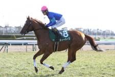 活きのいい4歳馬が有力な高松宮記念は、あえてベテランで勝負すべし